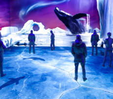 polarImmersium-gallery